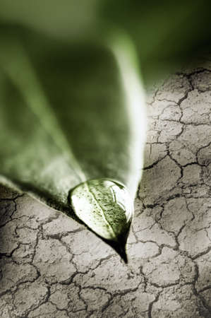Fresh water drop on tip of green leaf above dry cracked soil Stock Photo - 19382508