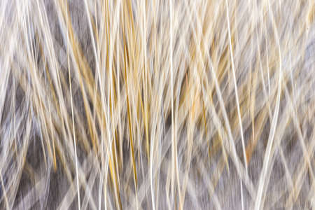 Artistic abstract blur of winter grass produced by camera motion Stock Photo - 19382549