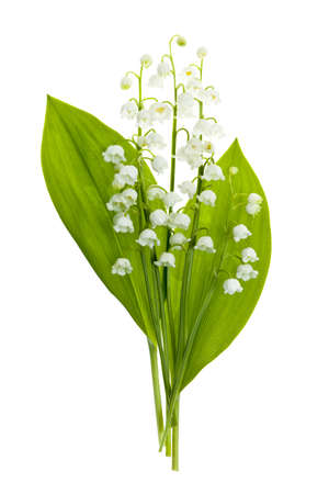 lirio blanco: Lirio del ramo de las flores del valle aislado en el fondo blanco