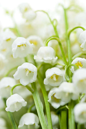 Lily of the valley delicate flowers macro closeup