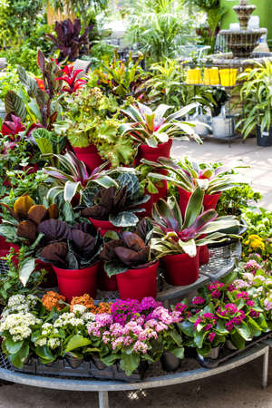flower nursery: Plant nursery store with many plants for sale on display rack