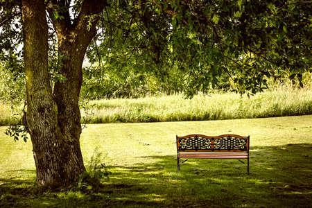 夏の公園の緑豊かな影がある木の下のベンチ 写真素材