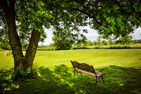 Panchina sotto rigoglioso albero ombroso in estate parco Archivio Fotografico