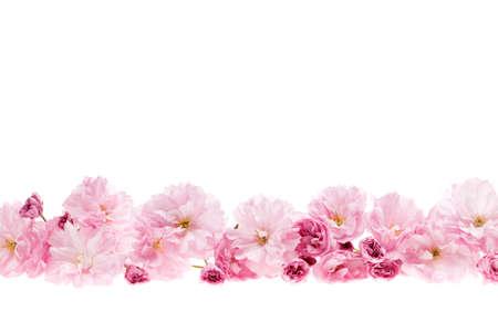 Rij van kersenbloesem bloemen als bloemenrand met een kopie ruimte geïsoleerd op witte achtergrond