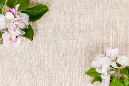 Natural linen background with spring apple blossom flowers 免版税图像
