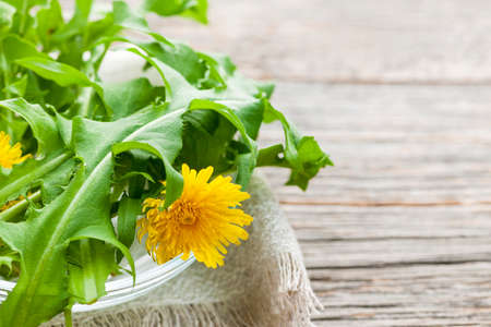 Foraged edible dandelion flowers and greens in bowl on rustic wood background with copy space