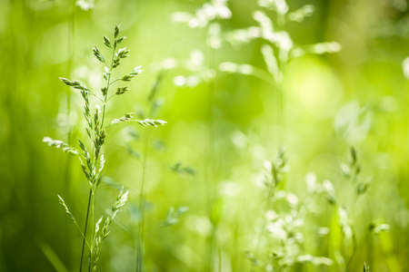 Summer flowering grass and green plants in June sunshine with copy space