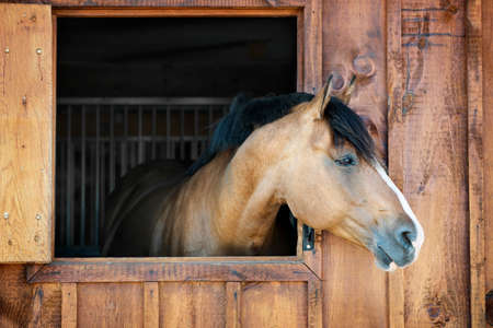 Curious brown horse looking out stable window Imagens - 26501525