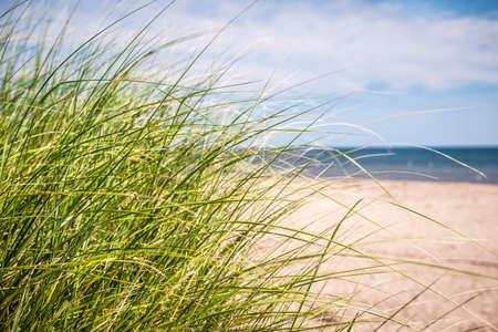Gras groeit op zandige strand van de Atlantische kust van Prince Edward Island, Canada Stockfoto