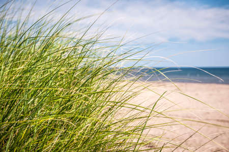 Grass growing on sandy beach at Atlantic coast of Prince Edward Island, Canada