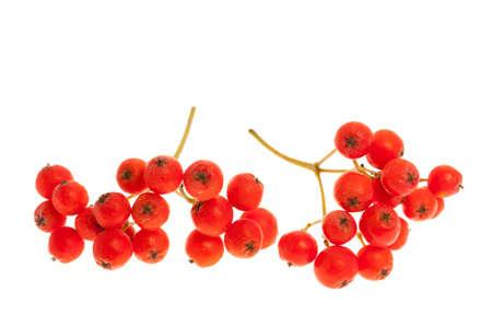 赤いナナカマドやナナカマドの果実が白い背景で隔離のクローズ アップ