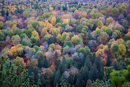 Fall forest trees viewed from Lookout trail in Algonquin Provincial Park, Canada. 写真素材
