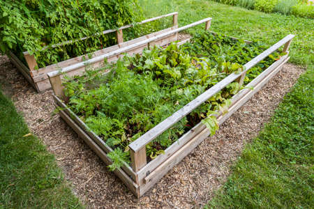 Backyard vegetable garden in wooden raised beds or boxes Stock Photo - 35893313