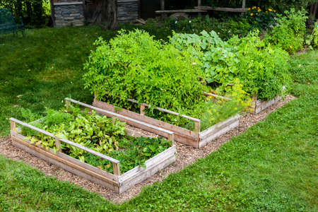 Three raised garden beds growing fresh vegetables in a backyard Фото со стока - 35893315