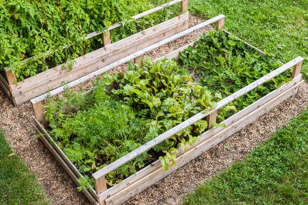나무 제기 침대 또는 상자에 뒤뜰 채소 정원 스톡 콘텐츠