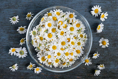 Fresh medicinal roman chamomile flowers in bowl on rustic wooden background