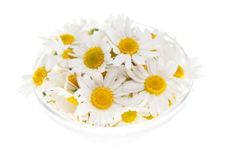 Fresh medicinal roman chamomile flowers in a bowl isolated on white background