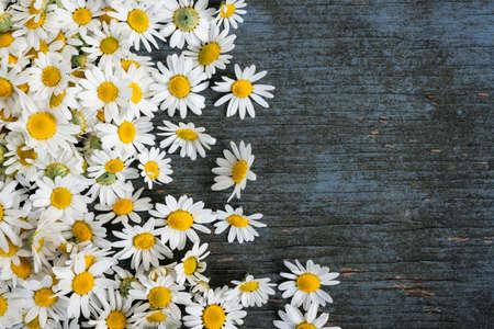 コピー スペースを持つ青の素朴な木製の背景に散在して新鮮な薬用ローマ カミツレの花