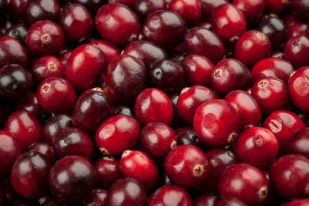Macro closeup on many fresh red ripe cranberries as background