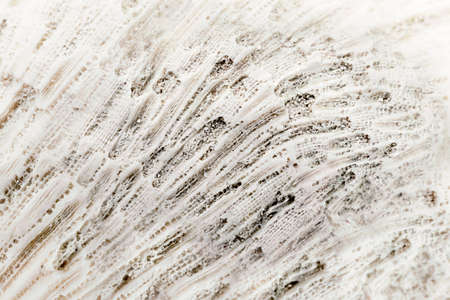 Macro closeup of bleached dead coral texture.