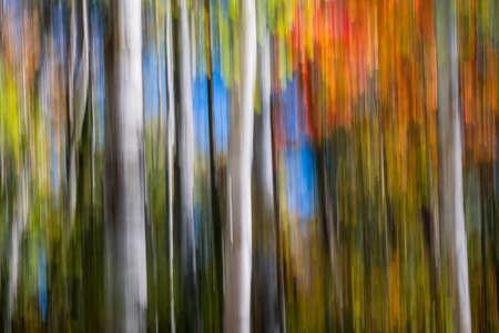 白樺の木の幹と鮮やかな赤とオレンジのカラフルな秋の森の抽象的な風景は秋の紅葉です。 カメラの動きによって生成されたイメージ。 写真素材