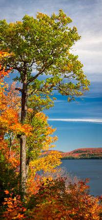 가을 호수 해안 및 다채로운 가을 숲, 세로 파노라마 높이 오크 트리. Algonquin Park, 캐나다.