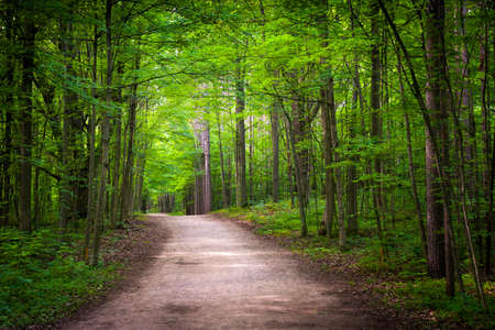 Hiking trail in green summer forest with sunshine. Hilton Falls conservation area, Ontario, Canada.