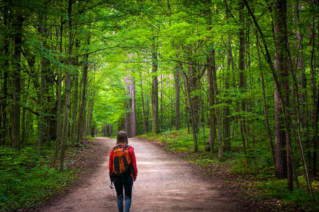Young woman hiker with backpack walking on hiking trail in green summer forest. Hilton Falls conservation area, Ontario, Canada.