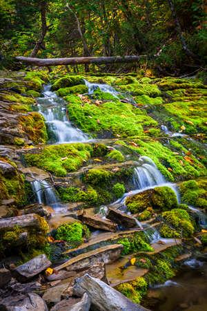 녹색 이끼를 통해 계단식 폭포 덮여 바위 Forillon 국립 공원, 개 스 페 반도, 퀘벡, 캐나다에서.