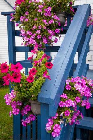 Roze en rode petuniabloemen in hangende manden die blauwe portiek van een huis verfraaien. Bonaventure, Gaspe Peninsula, Quebec, Canada.