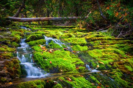Trapsgewijze waterval over groene mos bedekt rotsen in Forillon National Park, Gaspe schiereiland, Quebec, Canada. Stockfoto
