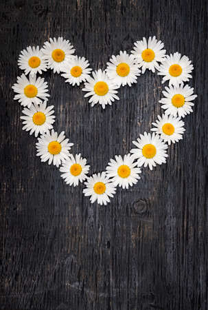 Heart shape of oxeye daisies on dark distressed wood background with copy space