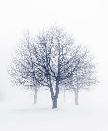 Winter scene of leafless trees in fog