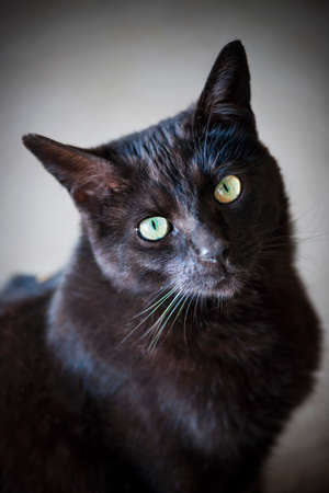 Portrait of black cat with green eyes