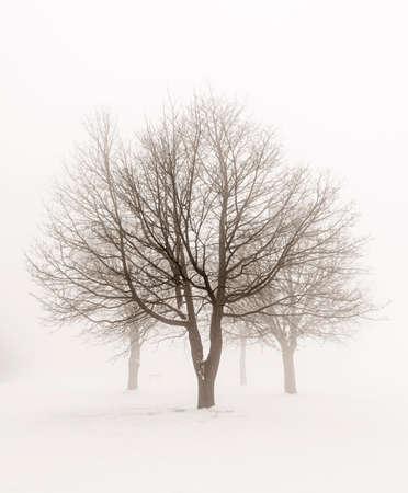 Winter scene of leafless trees in fog sepia tone