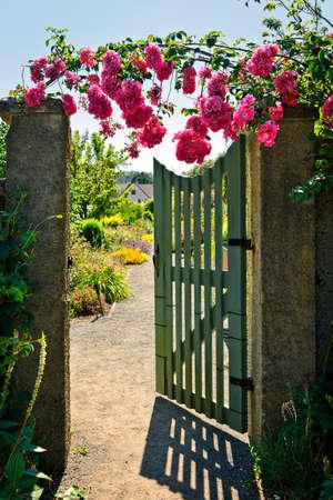 Pink roses hanging over open garden gate entrance Standard-Bild