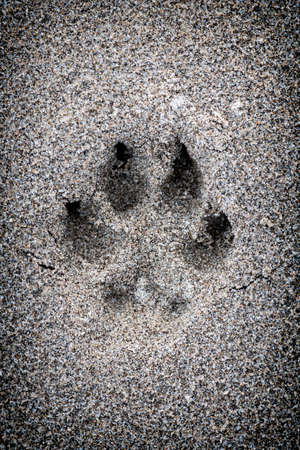 Closeup of dog paw print in sand