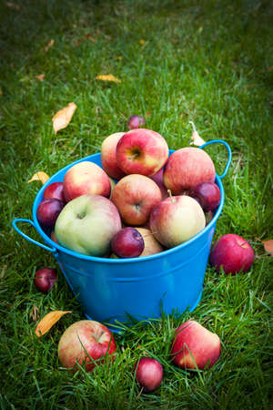 Fresh organic apples in blue pail on green grass with copy space