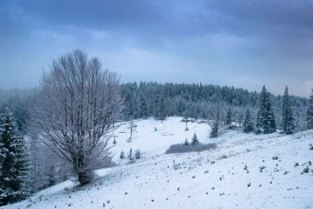Beautiful winter landscape with snow covered trees.\ Carpathians, Ukraine.