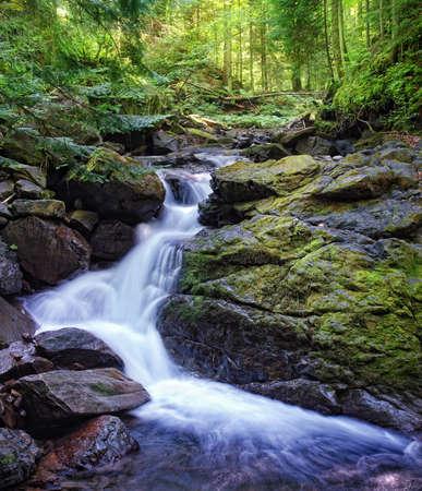 waterfall in forest: Deep wood. Carpathians, Ukraine.