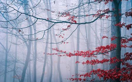 feuille arbre: Arbre dans la for�t brumeuse d'automne