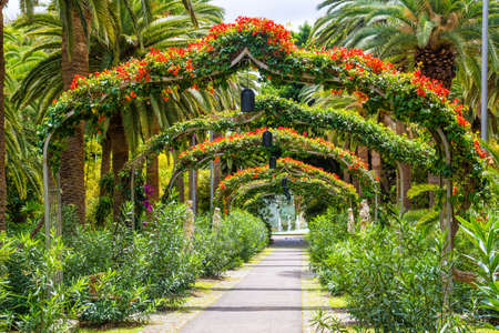 Amazing view of  arch way in Garcia Sanabria park. Location: Cacti garden in Santa Cruz de Tenerife, Tenerife, Canary Islands. Artistic picture. Beauty world.