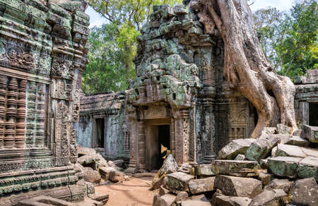 Tree roots over the beautiful Ta Prohm temple at Angkor, Siem Reap Province, Cambodia. It was founded by the Khmer King Jayavarman VII as a Mahayana Buddhist monastery and university.