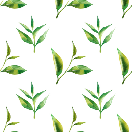 Floral seamless pattern with tea leaves. Green tea branch in hand drawn watercolor style. Tea background for paper, textile and wrapping