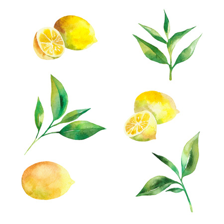 Tea leaves and lemons watercolor as design element. Green tea branch in hand drawn watercolor style. Tea background for paper, textile and wrapping