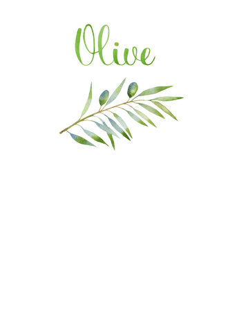 hand writing: olive branches watercolor and hand writing letters as design elements. isolated on white background
