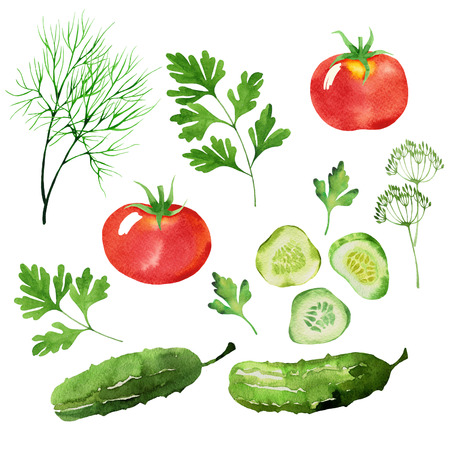 design set of dill, cucumber, tomatoes, cucumbers, salad leaves and parsley isolated in watercolor style Stock Photo