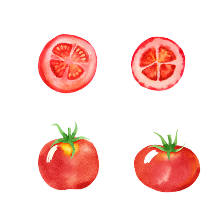 vegetable set of tomatoes isolated in watercolor style. vegetable background on white.Hand drawn background for paper, textile, decoration and wrapping