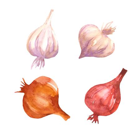 Set di cibo disegno di cipolle e aglio acquerello. Sfondo di verdure con cipolle disegnate a mano e aglio. Isolato su sfondo bianco. Archivio Fotografico