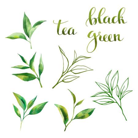 Conception de la nourriture sertie de thé feuilles aquarelle, croquis art au trait et lettrage. Style de dessin aquarelle à la main. Sur fond blanc Banque d'images